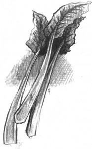 Rhubarb (compressed)