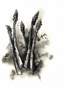 Asparagus.comp.